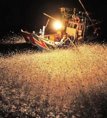 Pescadores en China utilizan fuego para atraer a los peces en la noche