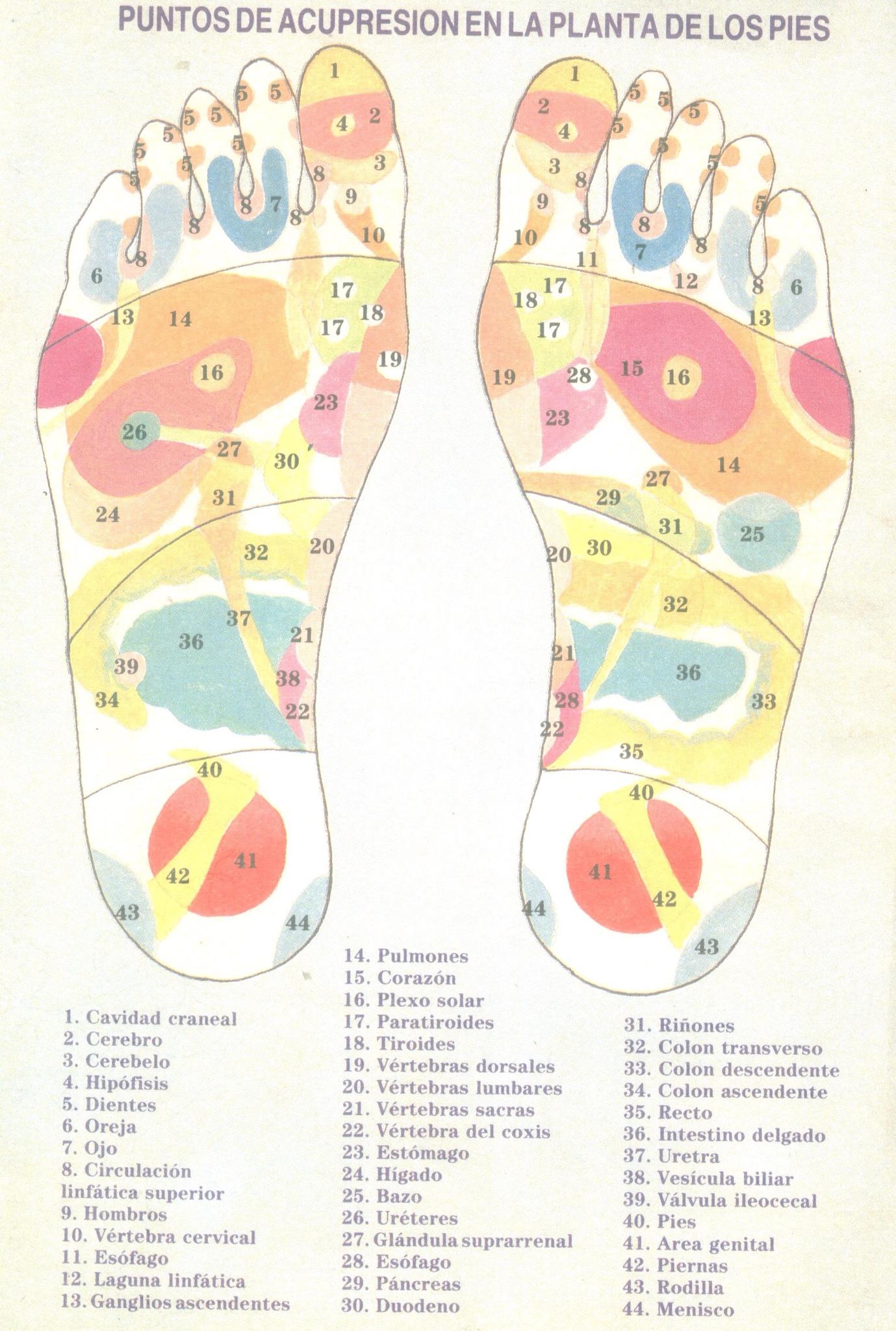 Puntos de acupresión en la planta de los pies